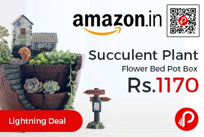 Succulent Plant Flower Bed Pot Box