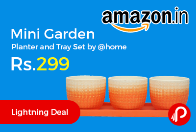 Mini Garden Planter and Tray